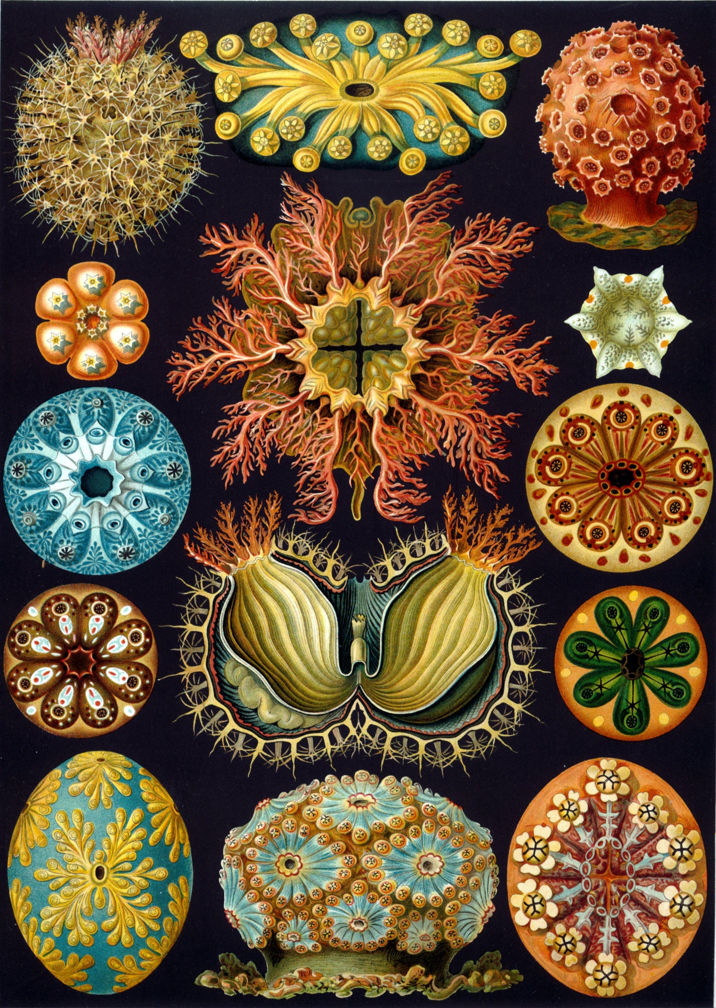 introduction of art nouveau Dans les années 1880, l'art nouveau s'adresse à une clientèle bourgeoise et restreinte de par ses propositions audacieuses le monde floral est une véritable.