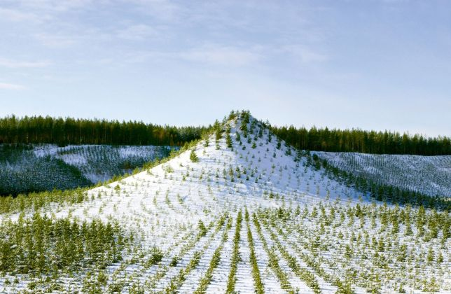 Agnes Denes Tree Moutain Land Art ecologie environnement