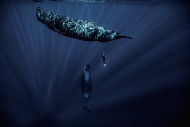 franck seguin whale