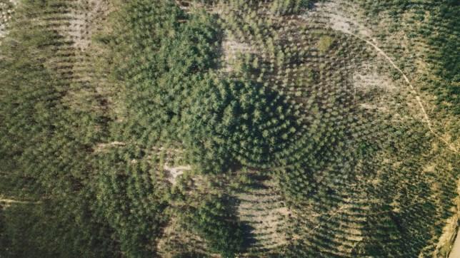 Agnes Denes Tree Mountain Land Art écologie environnement